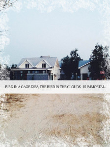 Bird in a cage dies